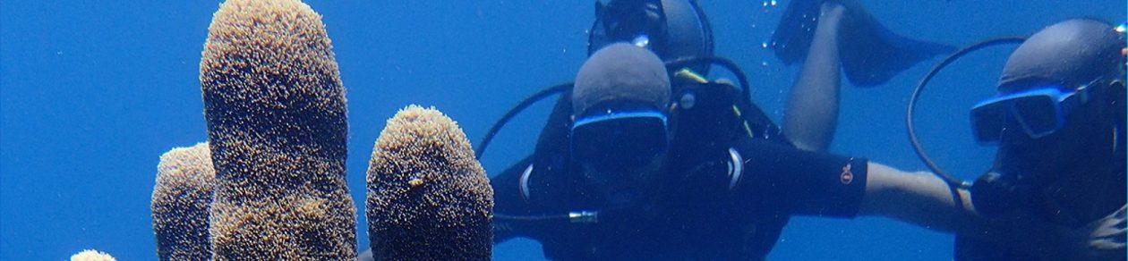 Dive Martinique